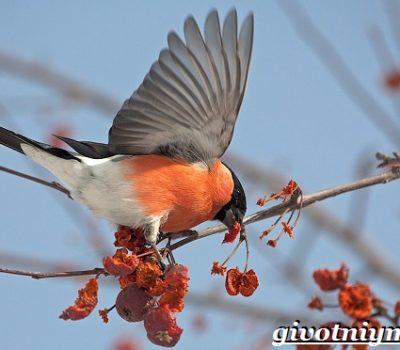 «Покорми птиц зимой»