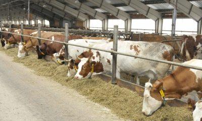 Производство молока в районе